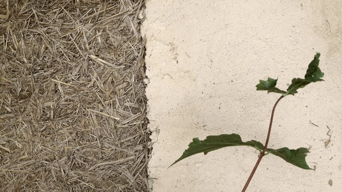 mur terre paille